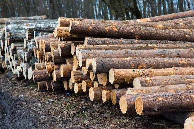 ブナの丸太、国立公園、森林材。木材