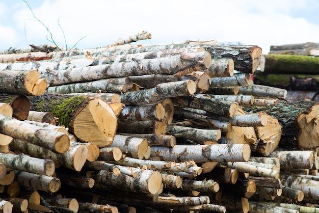 Буковые бревна, национальный парк, лесные пиломатериалы. древесный материал