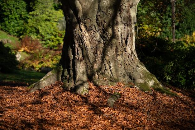 너도밤나무 가을 단풍
