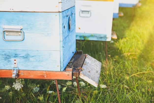 벌집 야외. 천연 꿀 만들기. 친환경 식품.