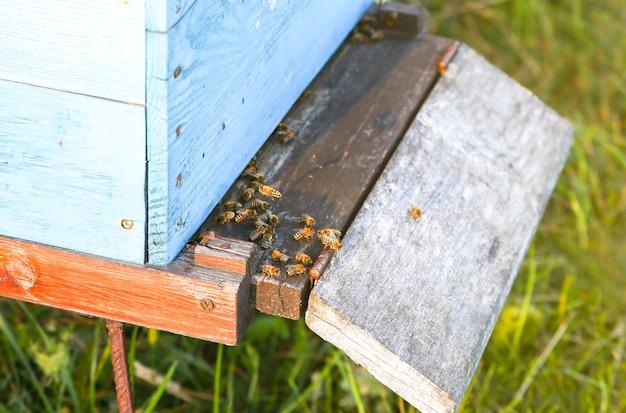 屋外の蜂の巣。自然な蜂蜜作り。環境にやさしい食品。