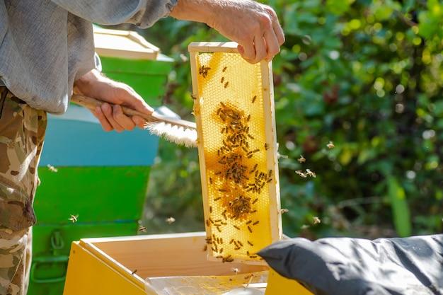 Улей spring management. пчеловод осматривает пчелиный улей и готовит пасеку к летнему сезону. пчеловодство.