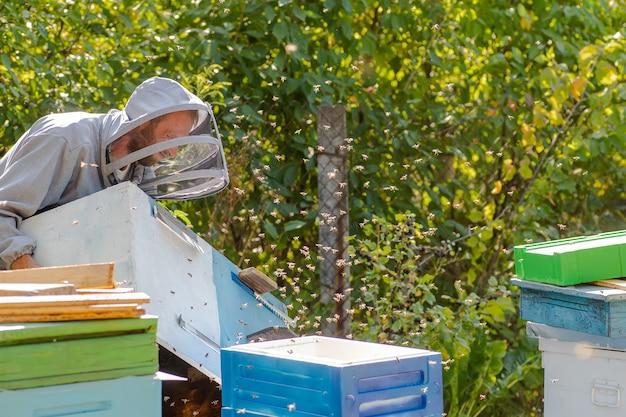 養蜂家は発泡スチロールから蜂の巣のユニットを運びます。ミツバチのコロニーの拡大。