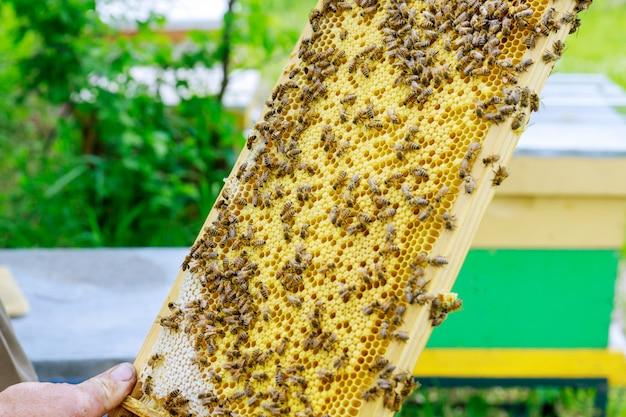 養蜂家は晴れた晴れた日に飛行中のハイブ近くのミツバチのコロニーをチェックします