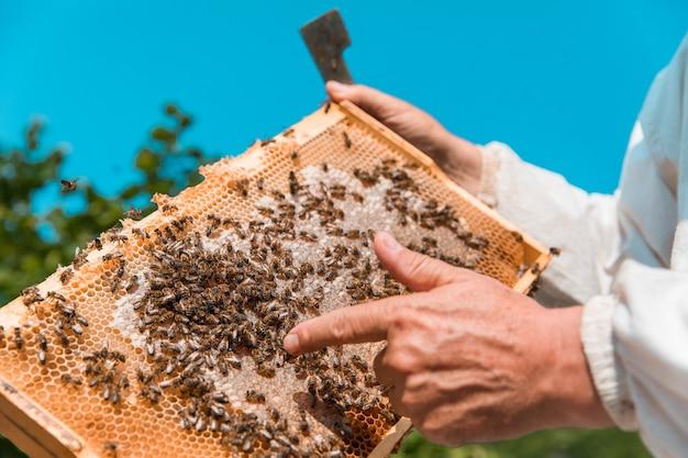 養蜂家は蜂蜜と蜂の巣箱を保持しています。高品質の写真