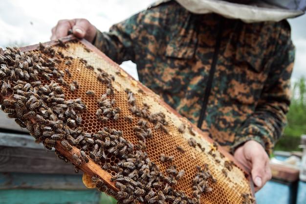 꿀벌과 벌집의 양 봉 지주 프레임입니다. 양봉장에서 벌집 프레임을 검사하고 벌꿀을 수확하는 보호 작업복의 양봉가. 양봉 개념