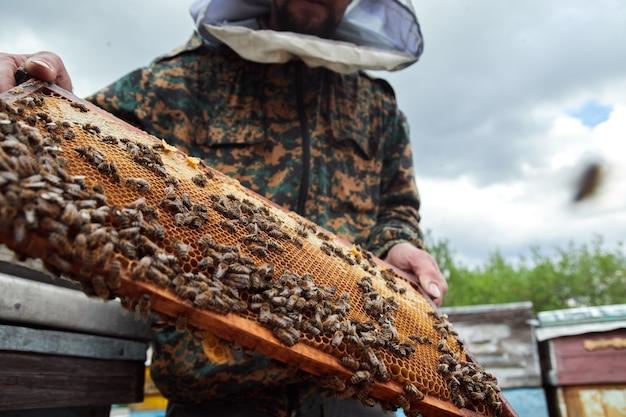 ミツバチと蜂の巣のフレームを保持している養蜂家。養蜂家が養蜂場でハニカムフレームを検査し、蜂蜜を収穫します。養蜂の概念