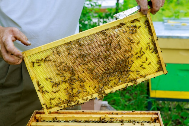 Beekeeper holds a caring for frames near the hives a man checks the hives beekeeping.