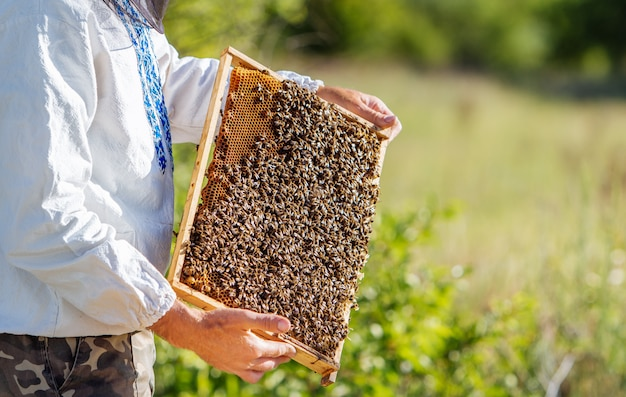 Beekeeper holds a frame with larvae of bees in his hands