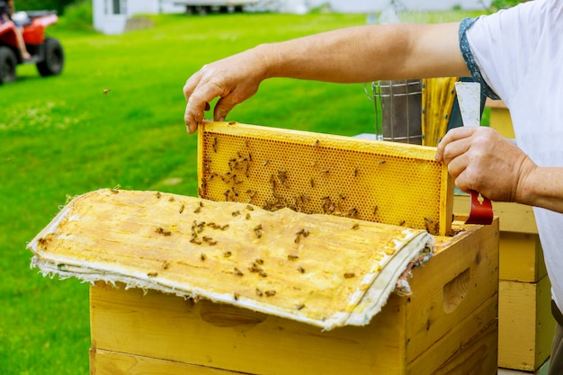 Beekeeper holds a open frame with honeycombs filled with honey