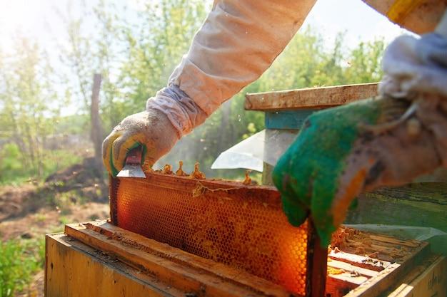 Пчеловод в перчатках и костюме пчеловода проверяет ульи с пчелами, готовится к сбору меда, ухаживает за рамками с сотами
