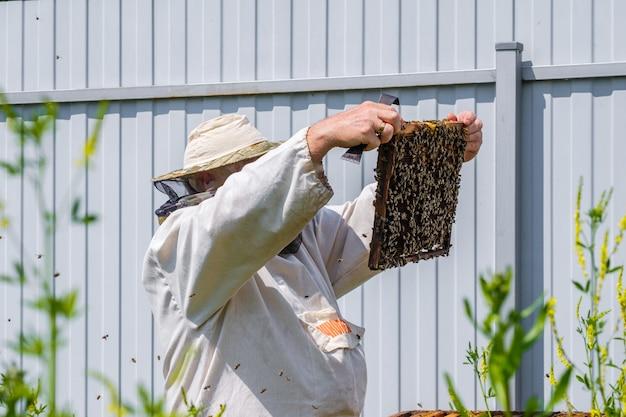 보호복을 입은 양봉가는 벌집으로 프레임을 검사합니다.