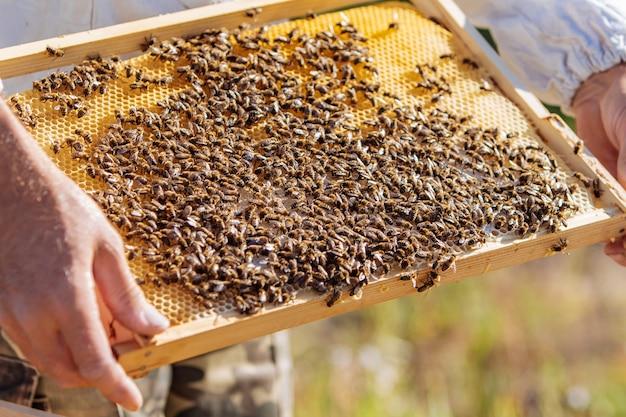 Пчеловод осматривает сотовый каркас на пасеке. медовая ферма.