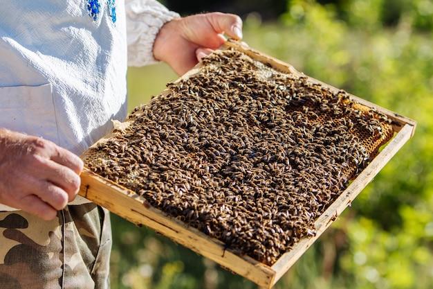 養蜂家が養蜂場でハニカムフレームを検査します。