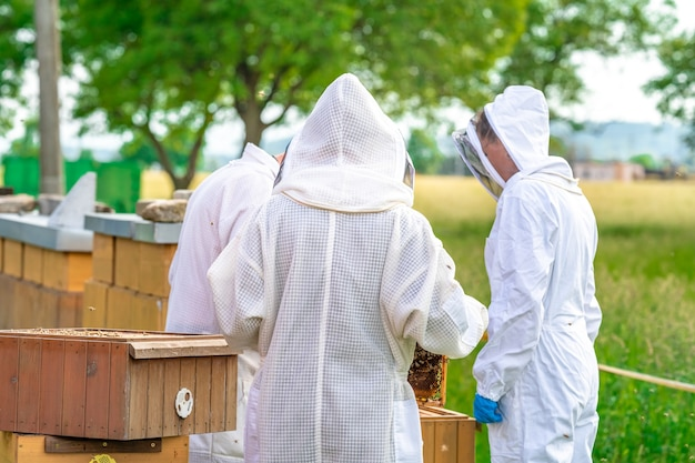 양봉가는 보호복을 입고 꿀벌을 검사합니다.