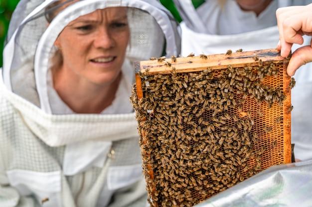 Пчеловод осматривает пчел в защитном костюме