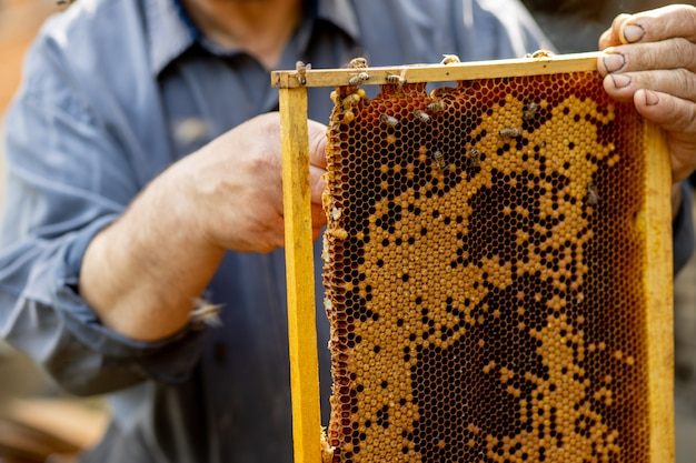 The beekeeper looks after honeycombs. apiarist shows an empty honeycomb. the beekeeper looks after bees and honeycombs. empty bee honeycombs
