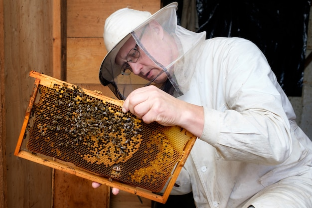 Beekeeper observing hive of bees