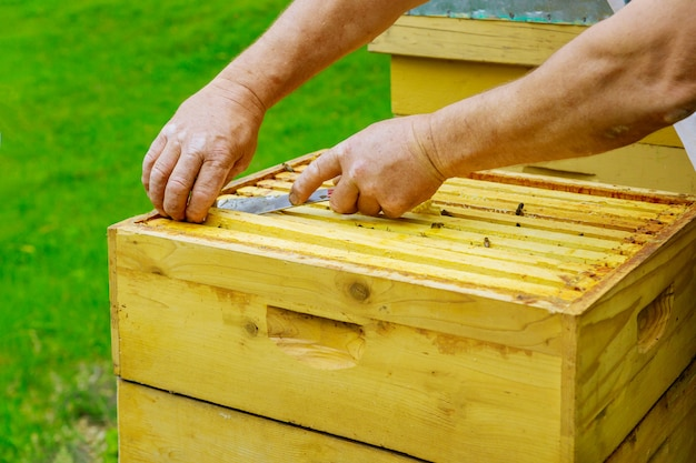 Пчеловод готовит улей к обзору жизни пчелиной семьи