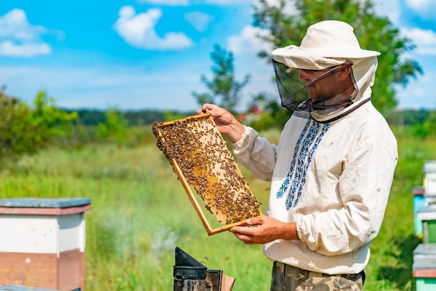 A beekeeper in protective clothing holds a frame with honeycombs for bees in the garden in the summer
