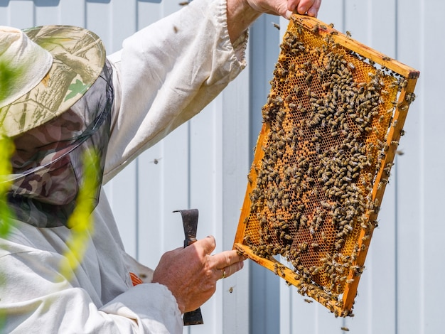 A beekeeper in protective clothing holds a frame with honeycombs