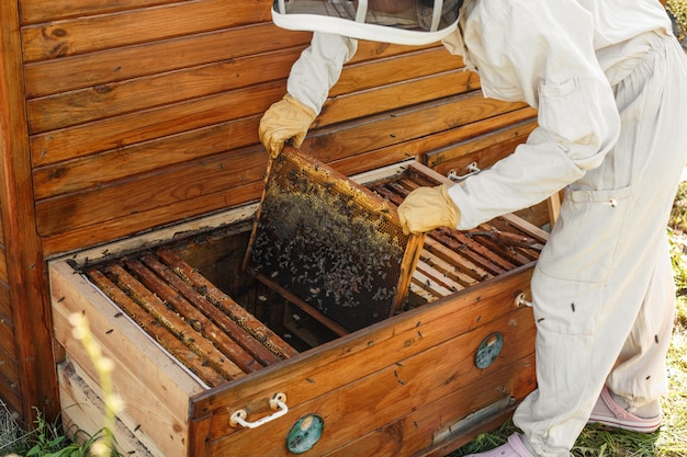 Beekeeper pulls out from the hive a wooden frame with honeycomb.