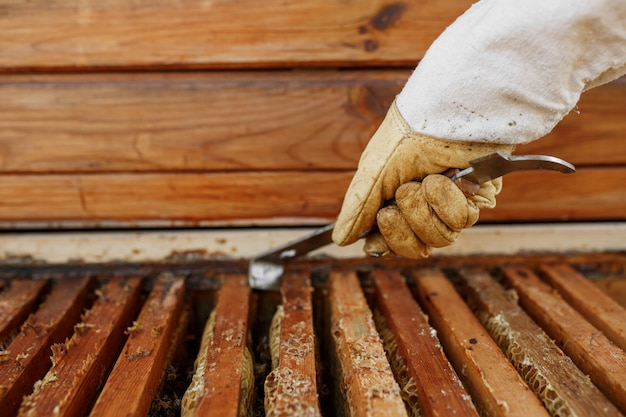 Beekeeper pulls out wooden frame with honeycomb from beehive using beekeeper tool. collect honey. beekeeping .