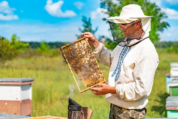 A beekeeper in a special suit looks at a frame with honeycombs for bees in the garden in summer
