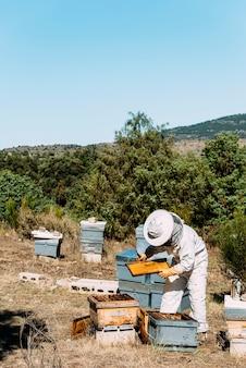 Beekeeper working collect honey. beekeeping concept.