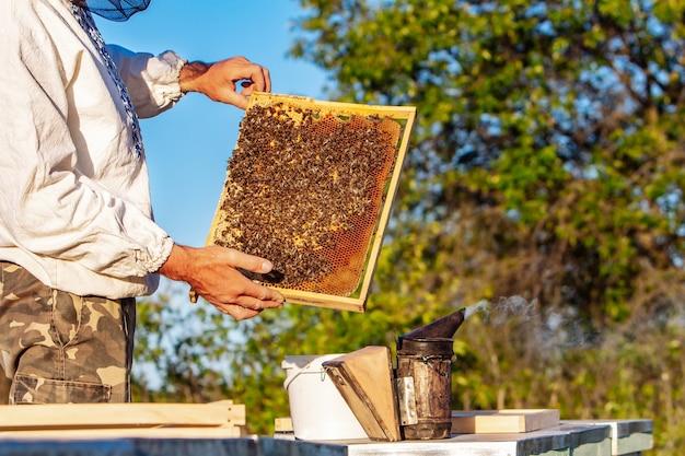 Пчеловод работает с пчелами на своей пасеке