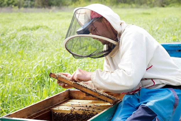 A beekeeper works to collect honey. beekeeping concept. beekeeper works with honey frames