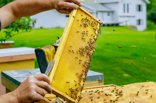 Beekeeper works on takes out frames with honeycombs for check of filling with honey