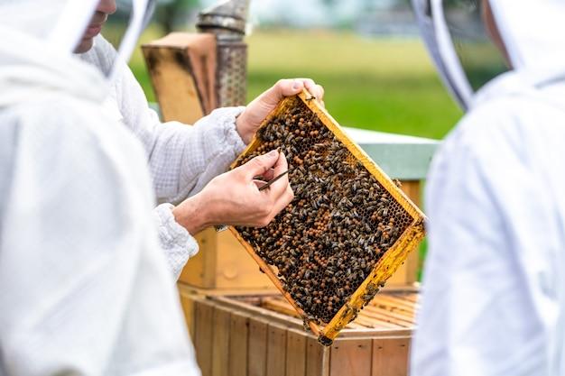양봉가는 양봉장에서 밀랍 틀에 있는 꿀벌을 검사합니다.