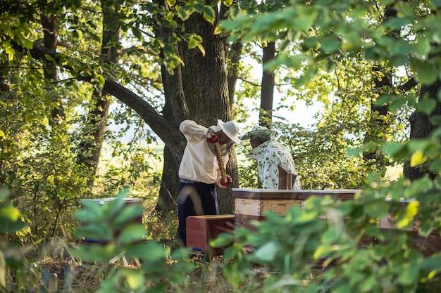 양봉가는 양봉장에서 꿀벌과 벌집을 가지고 일하고 있습니다. 정원의 진정한 삶의 장면
