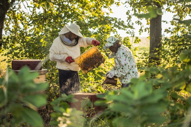 Beekeepers is working with bees and beehives on the apiary authentic scene of life in garden