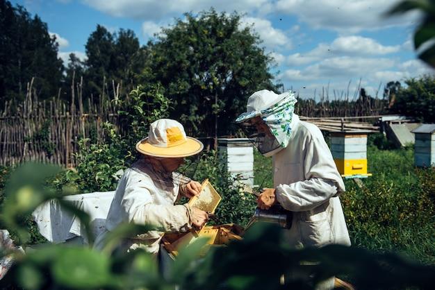 Пчеловоды возле улья обеспечивают здоровье пчелиных семей или сбор меда. пчеловоды в защитной спецодежде осматривают сотовую раму на пасеке. два пожилых фермера собирают органический мед