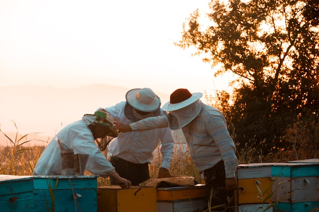 Beekeepers opening wooden bee hive boxes. high quality photo
