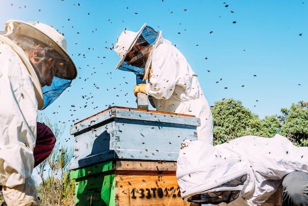 일하는 양봉가는 꿀을 수집