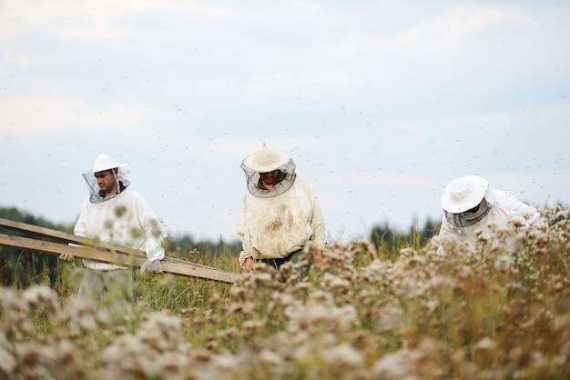 큰 분야에서 일하는 현장에서 일하는 양봉가 고품질 사진