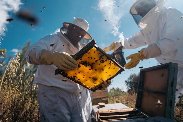 양봉가들은 꿀을 모으기 위해 노력하고 있습니다. 유기 양봉 개념.