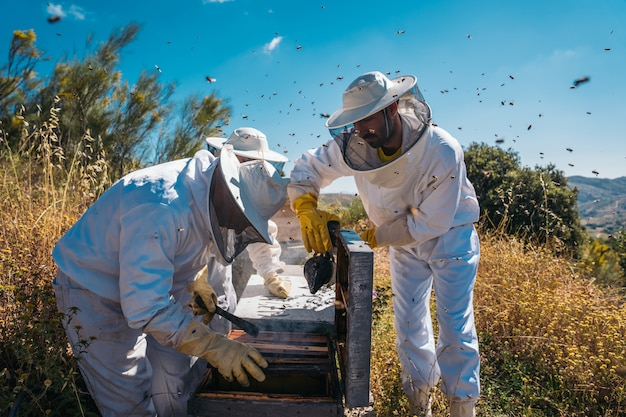 Пчеловоды работают, чтобы собрать мед. концепция органического пчеловодства.