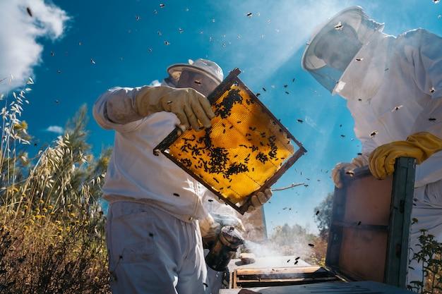 Пчеловоды работают, чтобы собрать мед