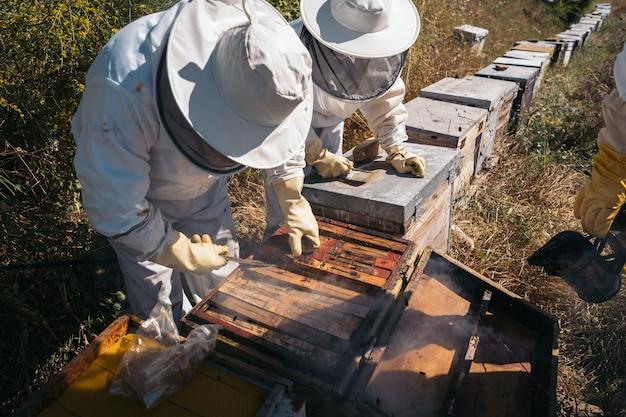 蜂蜜を収集するために働いている養蜂家