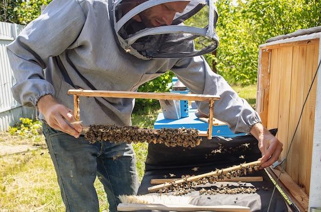 여왕벌의 유충을위한 양봉 여왕 세포. 봉인 된 여왕벌이있는 프레임이있는 양봉장의 양봉가는 꿀벌 여왕을 번식시키기 위해 나갈 준비가되어 있습니다. 소프트 포커스.