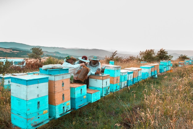 Beekepers gathering harvest from bee hives