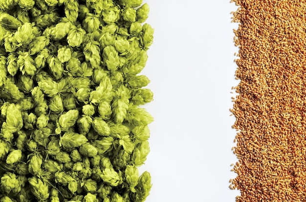 あなたのデザインの準備ができて白い背景のモックアップにホップと小麦のビールテンプレート