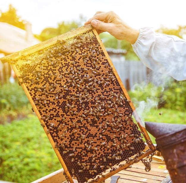꿀벌 벌집에 앉아 있다. 꿀벌은 꿀을 만듭니다.