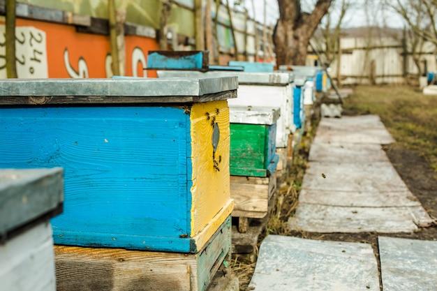 古いハイブの入り口でミツバチ