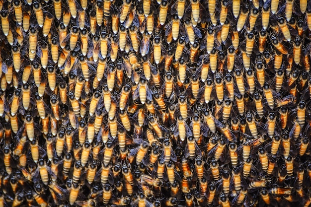 Bees background a lot of bees on honeycomb close up insect