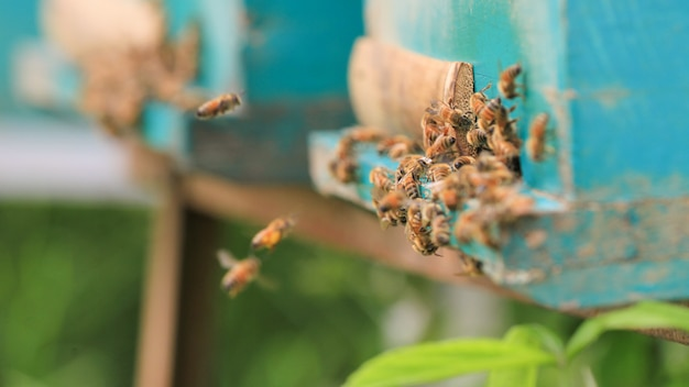 Bees on beehive on outdoors